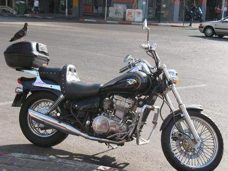 יונה על אופנוע