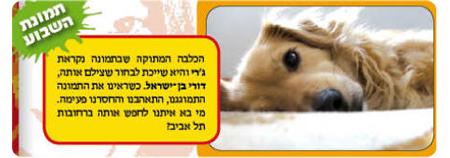 גרי בן ישראל, הכלבה הכי יפה ונחשקת ביקום!