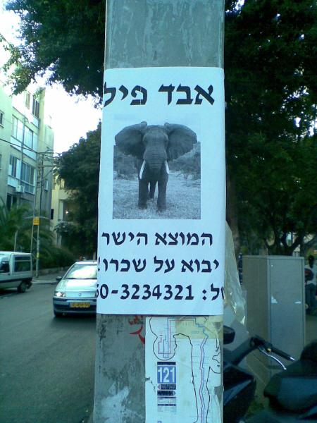 אבד פיל