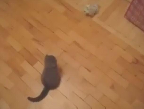 viralcats