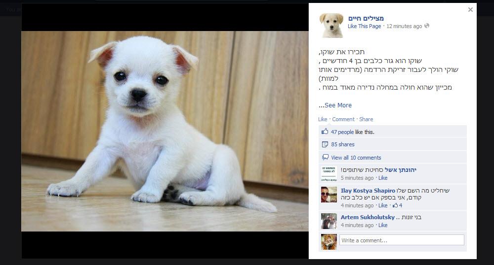 הונאת לייקים ישראלית בהתהוות: יעני עמותה, יעני מצילה חיים של כלבים