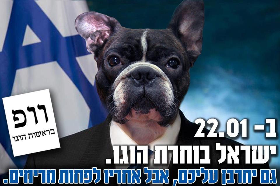 בחירות 2013: הוגו הכלב חוזר לסיבוב פוליטי נוסף