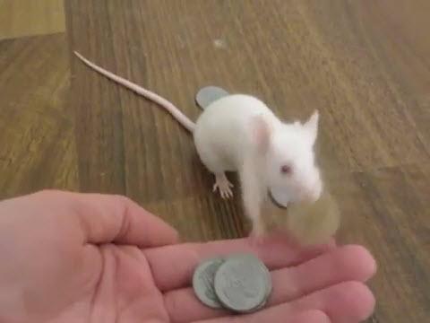 mousenoe