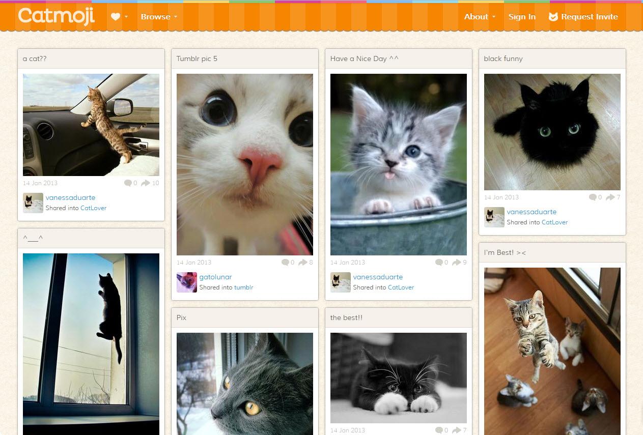 ויראלי: אומרים שחתולים הם מהות האינטרנט, צודקים! קבלו את פינטרסט החתולים