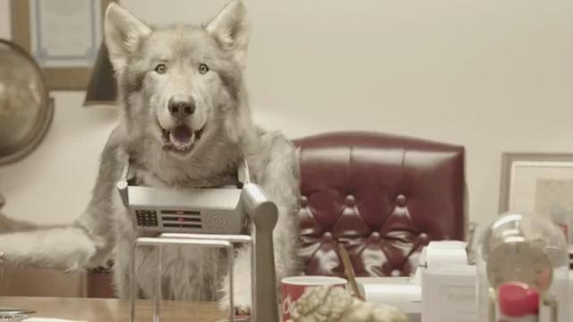oldspicedog
