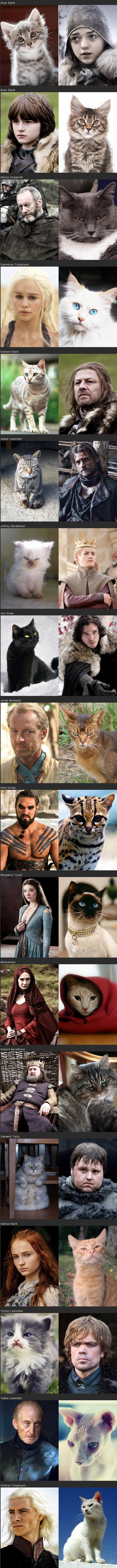 תמונות ויראליות: כוכבי משחקי הכס כחתולים