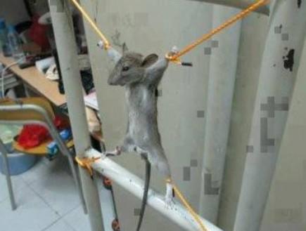 העכבר - במקום מטייוואן