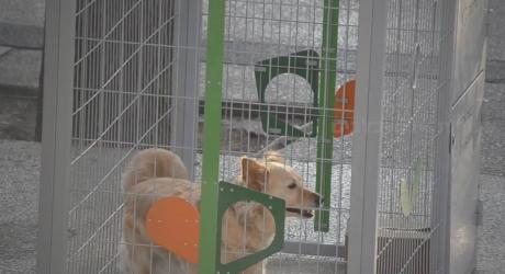 צפו: מי כלא כלבים חמודים אל תוך כלובי המיחזוריות ברעננה?