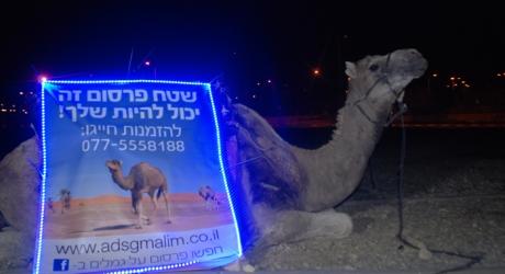 """פרסום ראשון: שים שלט על גמל! בואו לפרסם על גמלים במהלך קד""""מ עצמי של מקאן ואלי"""