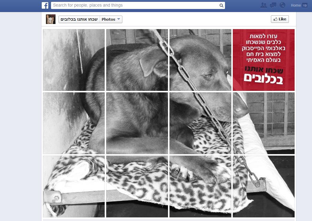 שכחו אותנו בכלובים - בואו לעזור למאות כלבים שנשכחו באלבומי הפייסבוק