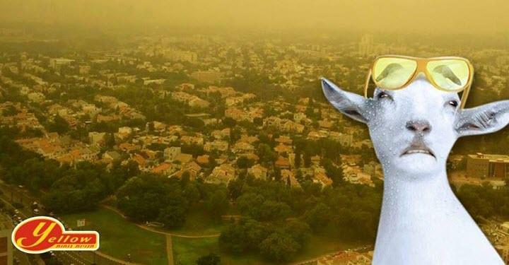 מקאן תל אביב - רשת yellow