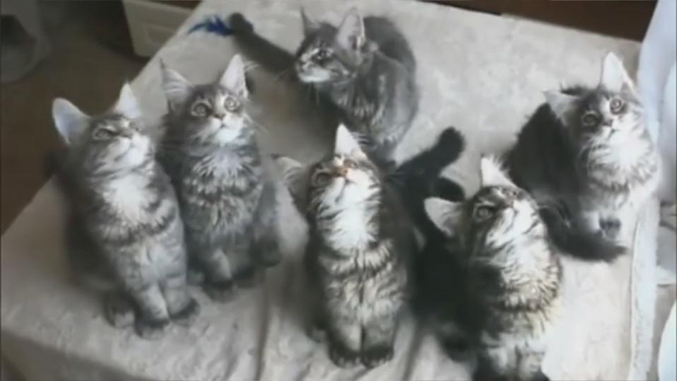 חתולים בכל מקום