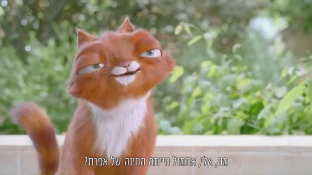 דדי החתול